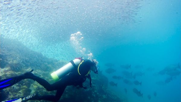 Deefer Diving Carriacou Free Fun Dives Offer