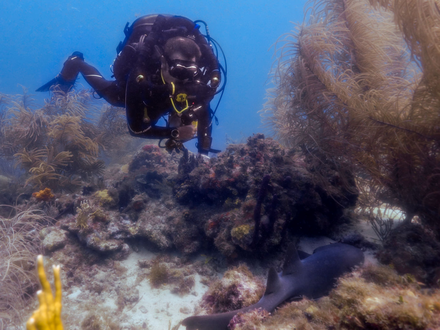 Rebreathers Have Amazing Benefits Over Open Circuit Diving
