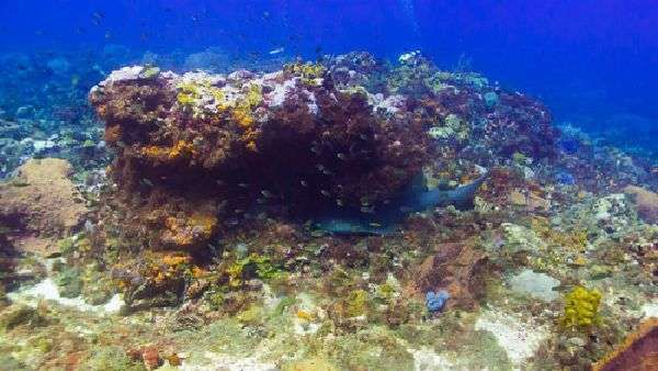 Deefer Diving Carriacou Prices & Offers